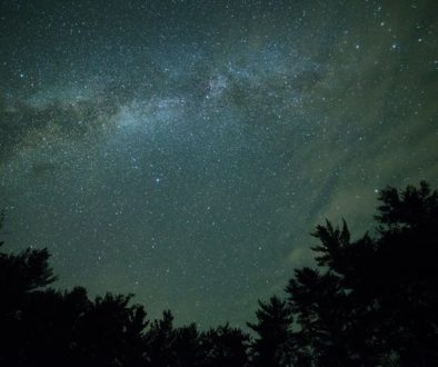 starry-sky-over-silhouette-of-trees-186599_sm